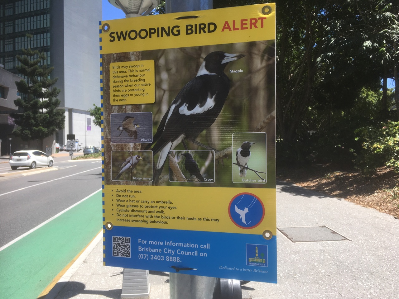 Blood and feathers: Sydney's angry birds take their toll  |Australia Swooping Birds Sign